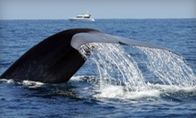 $12 for Two-Hour Evening Blue-Whale-Watching Trip with Dana Wharf Whale Watching (Up to $25 Value)