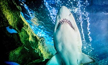 $79 for a Family Annual Pass to Greater Cleveland Aquarium ($130 Value)
