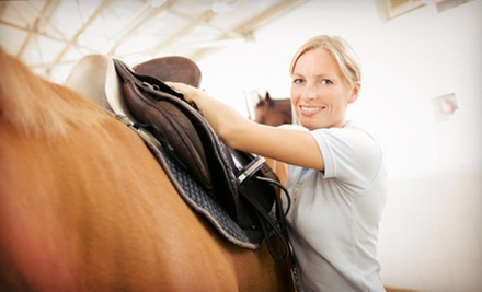 Two or Four 60-Minute Horseback-Riding Lessons at Amethyst Performance Horses (Up to 51% Off)