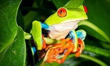 Exotic Pets and Supplies at Reptile Outpost (Up to 53% Off). Two Options Available. 