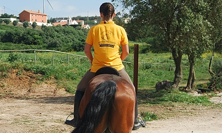Rédea Dourada — Sintra: 1 ou 3 meses de aulas de equitação desde 29€