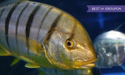 Aquarium Visit for Two, Four, or Six at Aquarium of Boise (Up to 45% Off)
