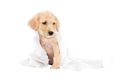 Dog Grooming at Pounds at Perfection Pet Care Boutique & Grooming (Up to 53% Off). Three Options Available.