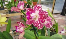 $15 for $30 Worth of Orchids, Plants, and Gardening Supplies at Eastfork Orchids