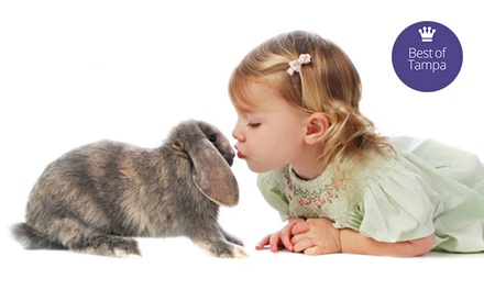 $19 for a 30-Minute Photo Shoot with a Bunny at Studio One to One ($59 Value)