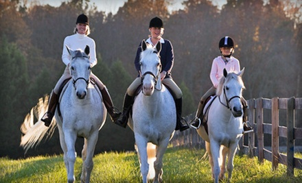 One, Three, or Five 30-Minute Private Horseback-Riding Lessons at Sapphire Hills Stable (Up to 60% Off)