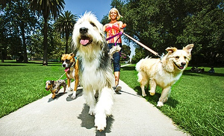 5, 10, 15, or 20 Half-Hour Relief Dog Walks at Dans Dog Walking and Pet Sitting (Up to 73% Off)