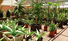 Desert Plants and Garden Accessories at Desert Gardens Nursery (Up to 55% Off). Two Options Available.