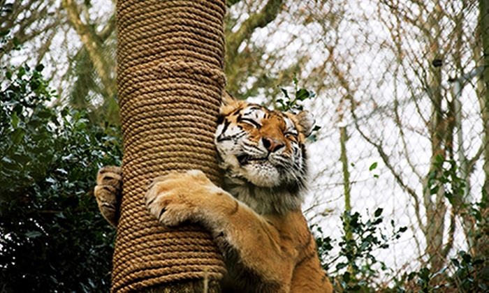 Dartmoor Zoo - Plymouth: Dartmoor Zoo: Entry For Two Adults (£9) or Family of Four (£14) (Up to 60% Off)