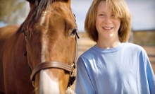 Two or Four Private Horseback Lessons at The Riding School at (51% Off)