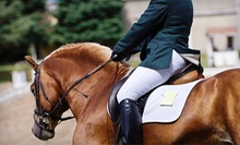 Horsemanship Class and a Riding Lesson at Hannaberry Farm (Up to 64% Off). Four Options Available.