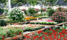 $10 for $20 Worth of Flowers, Plants, Gardening Supplies, and Hanging Baskets at Johansen Farms in Bolingbrook