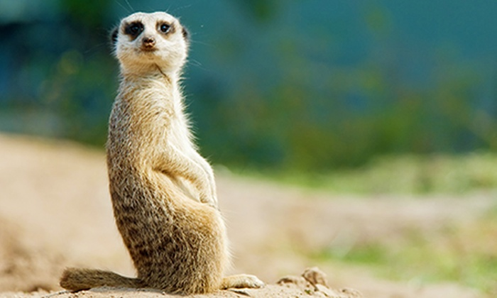 Bristol Zoo Gardens - Bristol: Bristol Zoo Gardens: Sunset Specials Entry from £10 (Up to 58% Off)