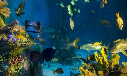 $45 for a Swim in a 33,500-Gallon Tank for Two with Breakfast or Lunch at RumFish Grill ($75 Total Value)