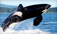 Orca Whale-Watching Tour for One, Two, or Four from Mystic Sea Charters (Up to 46% Off)