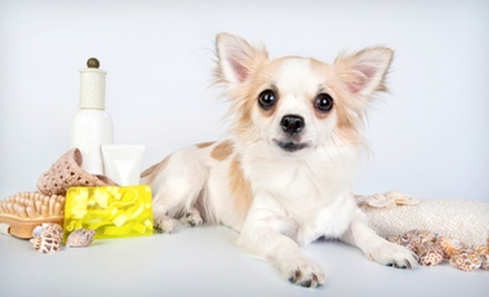 Spring De-Shedding Package for a Small, Medium, or Large Dog at Tidy Dogs Grooming Spa (Up to 55% Off)
