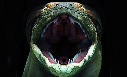 $25 for Visit to the Giant-Snake and Butterfly Exhibit for Four at Florida Museum of Natural History (Up to $56 Value)