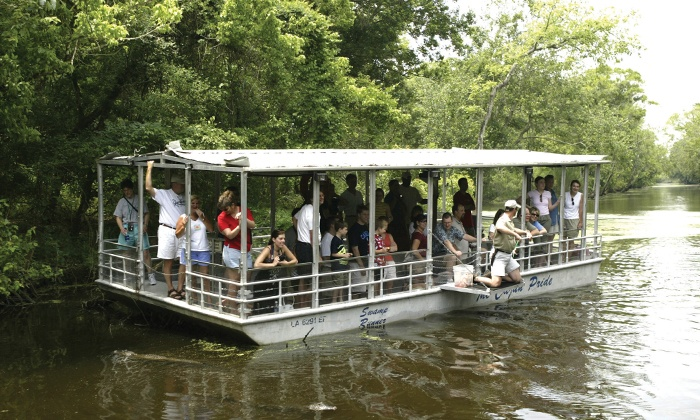 Houma Swamp Boat Tours
