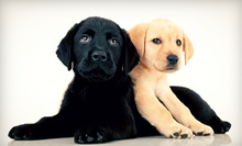 Vaccination Package for a Dog or Cat or Three or Seven Nights of Dog or Cat Boarding (Up to 57% Off)