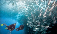 $149 for PADI Scuba Certification at Rick's Diving Locker ($299 Value)