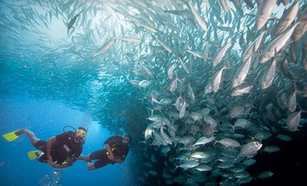 $149 for PADI Scuba Certification at Rick&#x27;s Diving Locker ($299 Value)
