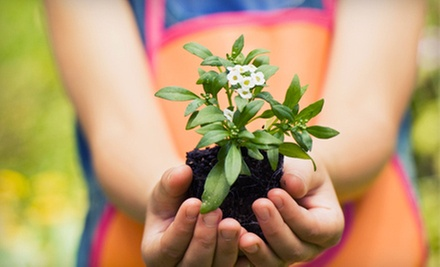 $15 for $30 Worth of Plants and Garden Supplies at Garden Gate Nursery