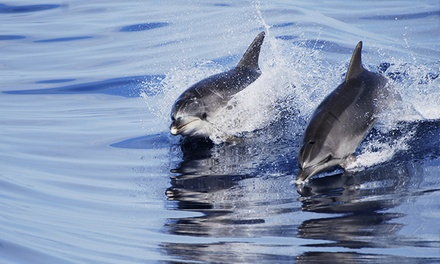 Whale- and Dolphin-Watching Cruise for Two, Four, or Six from Sightseer Whale & Dolphin Trips (Up to 63% Off)