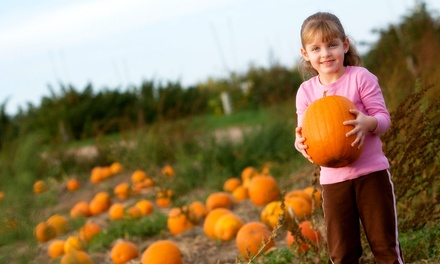 Pumpkin-Patch Admission for Two or Four at Pipe Creek Pumpkin Patch (50% Off)