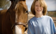 One or Two One-Hour Horseback-Riding Lessons at MD Barrel Horses (Half Off)