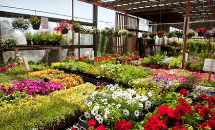 $25 for $50 Worth of Plants and Gardening Supplies at Kirshner's Garden Center