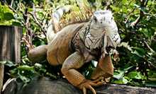 $12 for a Family Zoo Outing for Four at World of Discovery Reptile Zoo (Up to $24 Value)