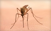 One or Three Indoor and Outdoor Pest-Control Sprays or Mosquito Treatments from Dave's Pest Control (Up to 82% Off)