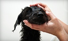 Three or Six Basic or Premium Self-Serve Dog Washes at The Paws of Nature (Up to 63% Off)