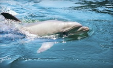 $25 for a Wildlife-Viewing Boat Tour Along Indian River Estuary for Two from DolFunTours LLC (Up to $56 Value)
