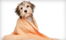 "Three or Six Self-Serve Dog Washes at ""Paws""onal Touch Dog Wash (Up to 58% Off)"