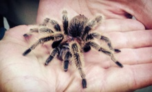 Admission for Two or Four to Insectarium (Up to 53% Off)