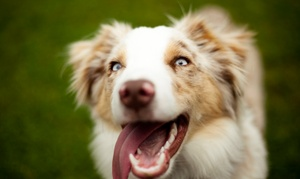 Vaccines Or Pet Boarding At Millhopper Veterinary Medical Center (up To 55% Off). Five Options Available.