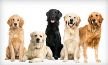 One or Five Dog-Daycare Visits or Three Consecutive Nights of Dog Boarding at Happy Hounds (Half Off)