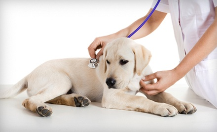 Pet Microchip Implantation, Cat Exam, or Dog Exam at The Downtown Animal Hospital (Up to 65% Off)