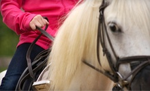 One or Four One-Hour Private Horseback Riding Lessons at Saxton Equestrian (Up to 59% Off)
