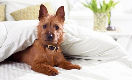 Pet Fun — Coimbra: estadia de 2, 5 ou 7 noites em hotel canino com alimentação para um cão desde 14,90€