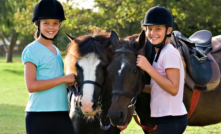 Horseback-Riding Lesson for One or Two at Madison Horse Connection (Up to 54% Off)