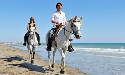 Guided, 60-Minute Ride on the Beach for Two, Four, or Six from Happy Trails Walking Horses, LLC (Up to 52% Off)