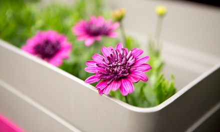 Plants at Mister's Green Thumb (Up to 50% Off). Three Options Available.