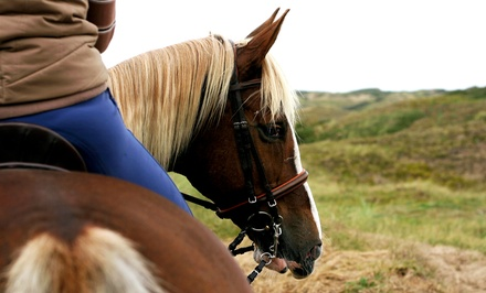 Horseback-Riding Lesson for One, Two, or Four at Hideaway Horse Center (Up to 54% Off)