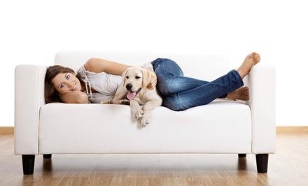 Protecleaning — Grande Lisboa: limpeza ou limpeza e impermeabilização de tapete ou sofá desde 24€