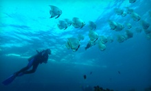 "$139 for PADI ""Learn to Scuba Dive"" Certification Course at Tortuga Bay"