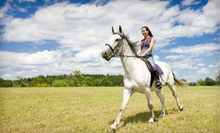 $30 for 1 Hour Western Riding Lesson at Broken Bow Ranch