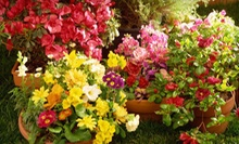 $15 for $30 Worth of Plants and Soil  at Boston Gardener