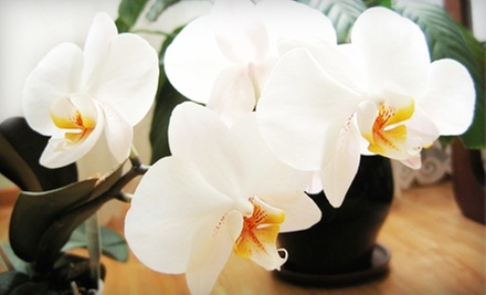 $25 for Bottle of Wine Experience & Take Home Orchid Arrangement at Emerald City Orchids